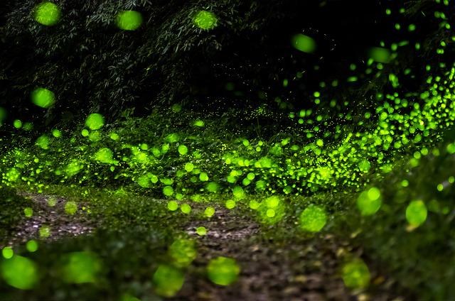平溪螢火蟲